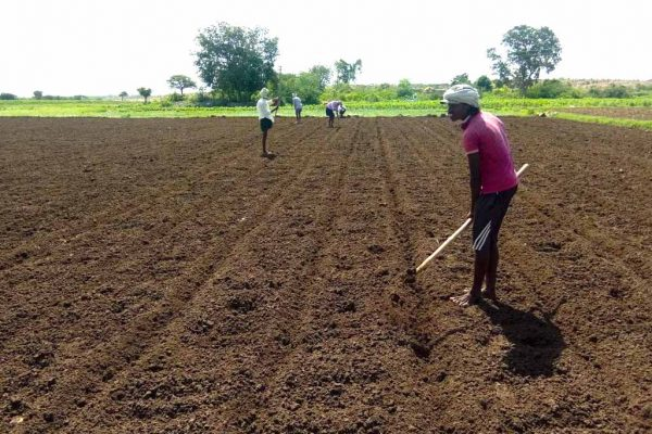Chilly Cultivation Started in Andhra Pradesh